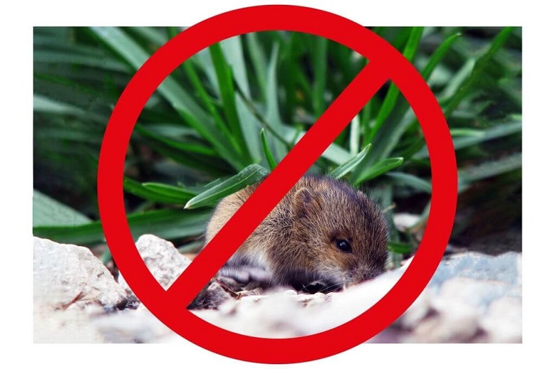 Mice Control Services Chicago
