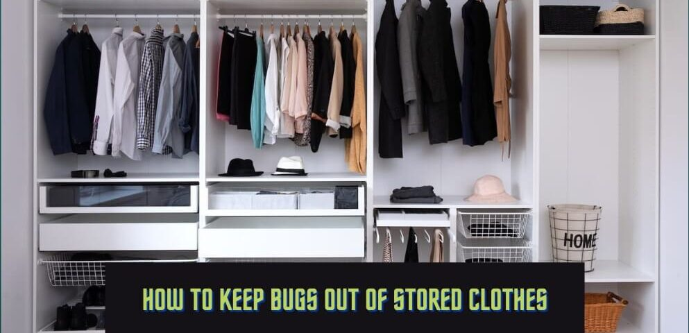 How To Keep Bugs Out Of Stored Clothes - Pest Control Chicagoland