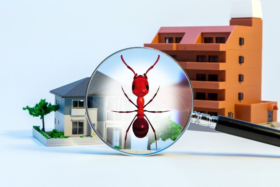 Residential and Commercial Pest Control Service