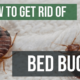 Get Rid Of Be Bugs Chicagoland